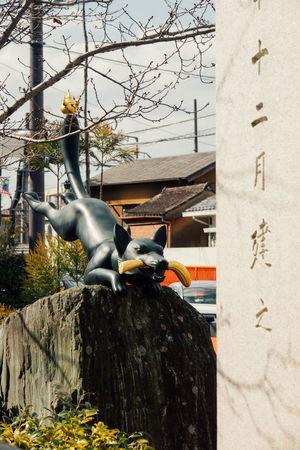 Fushimi Fushimi Inari Fushimi Inari Kyoto Fushimi Inari Shrine Fushimi Inari Taisha Gate Inari Japan Kyoto Red Sanctuary  Shinto Shintoism Shrine Temple TORII Torii Gate