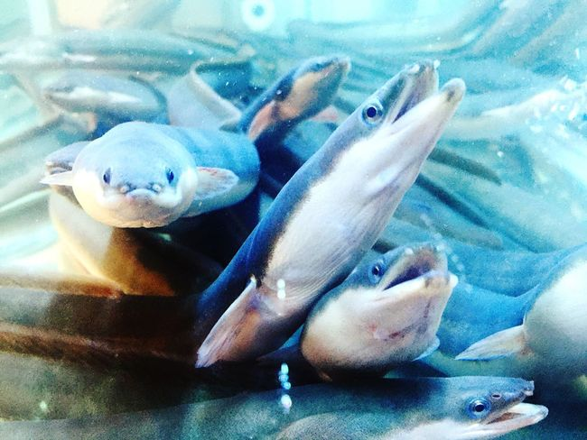 Nature Animal Themes Animals In The Wild Water Animal Eels