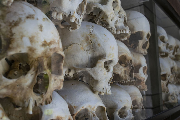 Full frame shot of human skulls on shelf