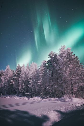 Rising auroras Tree Beauty In Nature Sky Snow Winter Cold Temperature Night No People Nature Tranquility Tranquil Scene Star - Space Idyllic Frost Frozen Landscape Moonlight Northern Lights Aurora Borealis Travel Photography Freshness Eye4photography  Astronomy EyeEm Best Shots