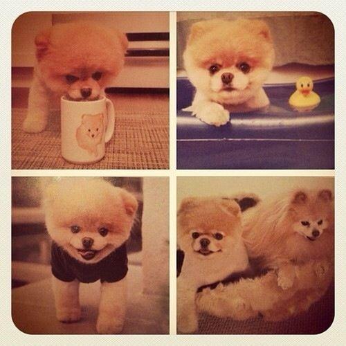 Aww So Cute