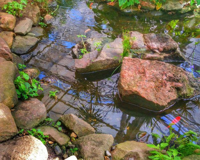 Rocks in pond