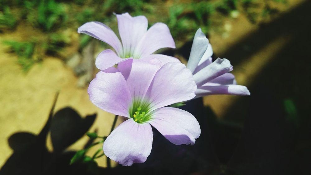 Flower Galaxidi Greece In Eyeem