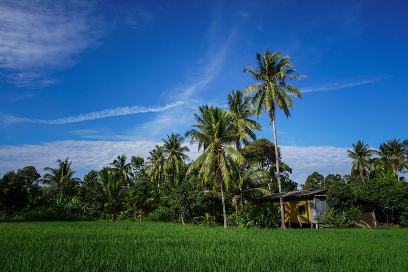 Beauty In Nature Blue Day Grass Growth Landscape Nature No People Outdoors Palm Tree Scenics Sky Tree