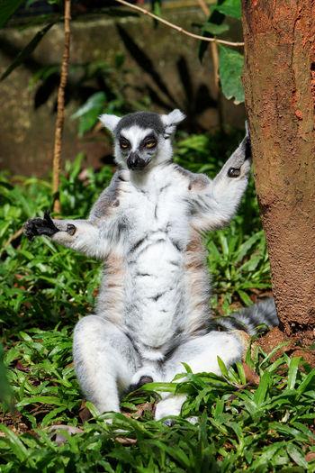Portrait of cat sitting on tree
