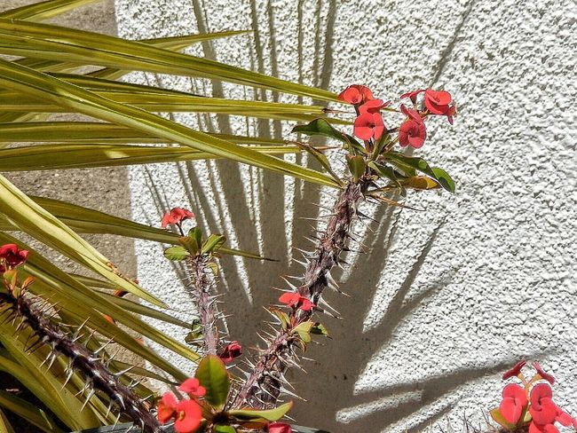 Red Flower Shadow And Light Spain♥ Andalucía Karen Grace