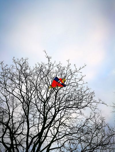 Kite in tree. Kite Kite Flying Kites Tree Trees And Sky Berlin Berlin Nature Flying Nature Day No People Outdoors