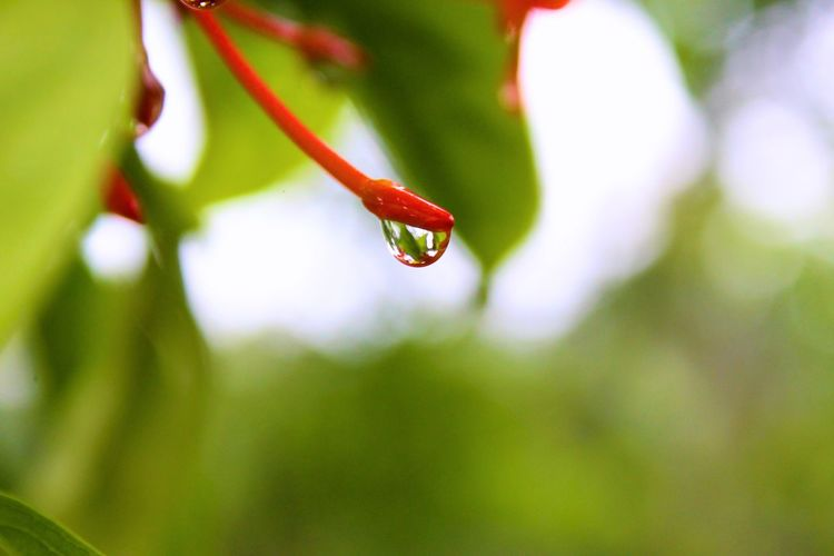 Water Leaf Insect Drop Trapped Close-up Animal Themes Plant Green Color Grass Dew RainDrop Monsoon Rainy Season Wet Rain Rainfall