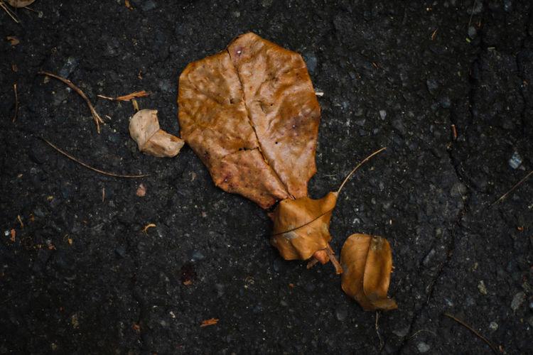 Leaf old