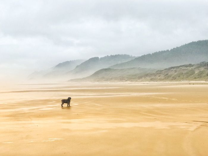 Scenic view of dog on beach  against sky