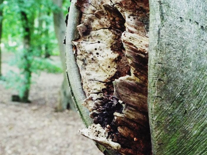 Enjoying Bokeh Photography right now had great Fun on my walk. Tree Trunk Wood - Material Day Log Close-up Outdoors No People Textured  Nature Tree Stump Growth Tree