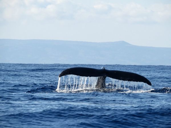 Capturing Movement Maui Whale Watching The Right Place At The Right Moment Whale