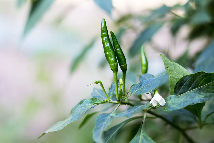 Beauty In Nature Close-up Fragility Freshness Green Color Growth Leaf Nature New Life No People Plant