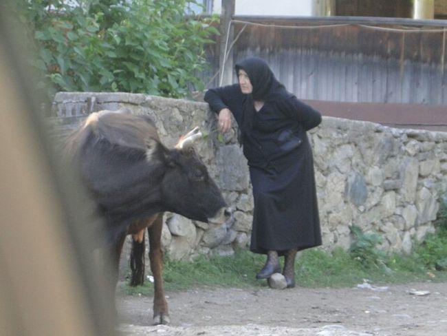 Georgia Mestia