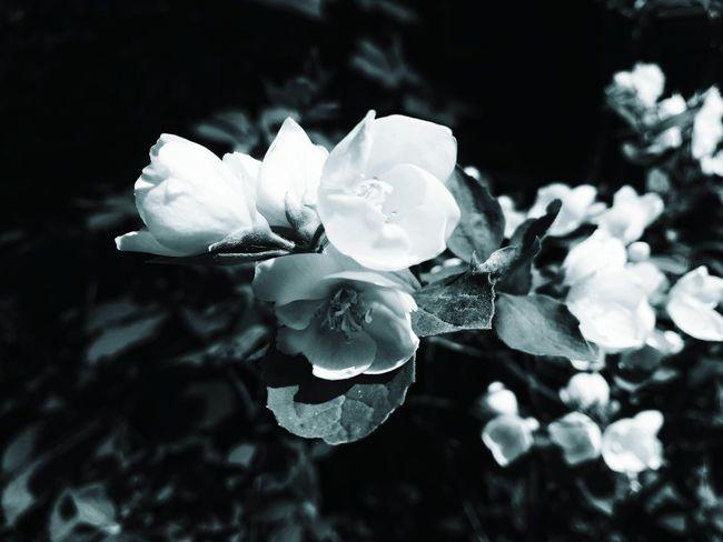 blue jasmine) Eyemphotos EyeEm Nature Lover Flower Thebest Photography Looking At Camera Mobilephotography Bestshot EyeEm Best Shots EyeEmNewHere EyeEm Nature Lover Eye4photography  EyeEm Gallery EyeEm Flower Head Flower Petal Close-up Plant In Bloom Botany