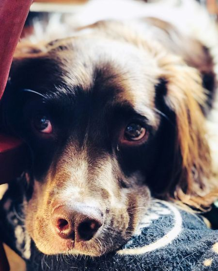 🐶 IPhoneX Dog