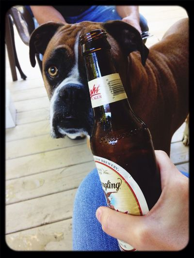 No, Pete  . You're Not Old Enough To Drink . Yuengling Lager
