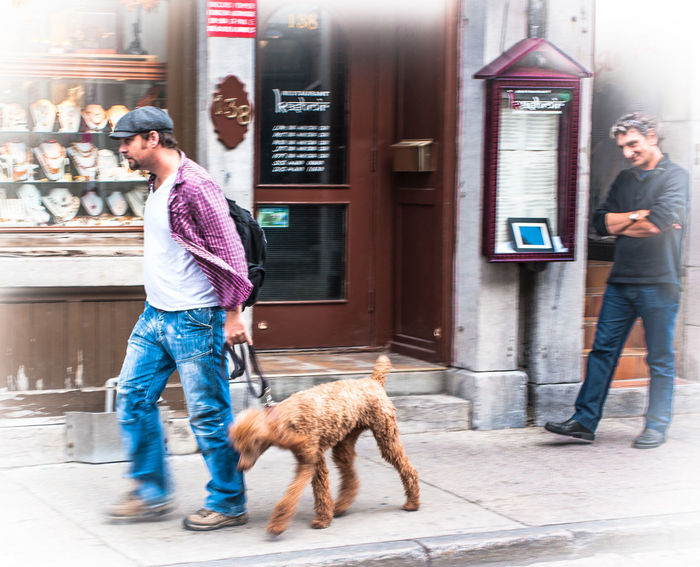 Funny looking dog Dog Dogs Dog Love Dog❤ Dogslife DogLove Doglover Dog Lover Montréal Walking The Dog
