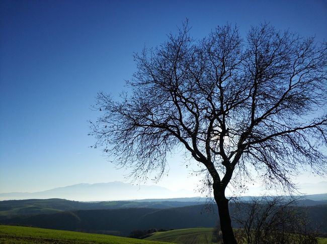 Tree Nature Beauty In Nature No People Outdoors Sky Blue Day Mountain