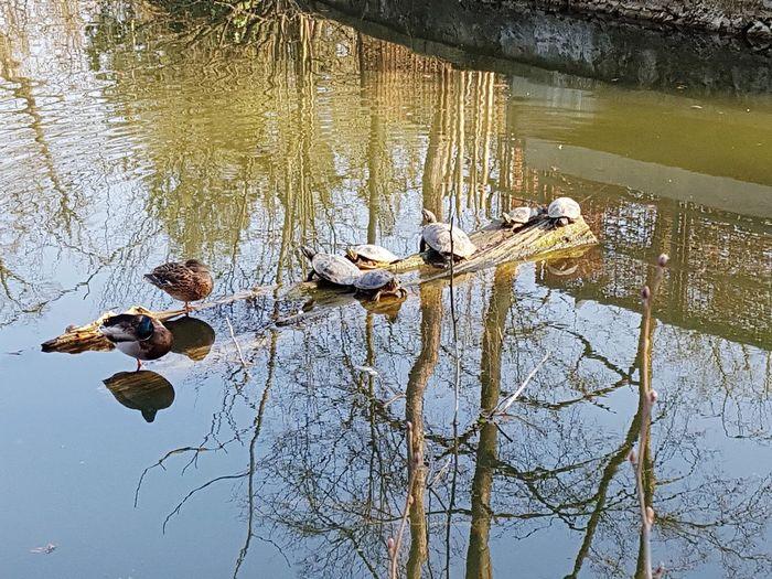 Nature Water Lake Beauty In Nature Zoo Zagreb, Croatia 🐢🐢🐢