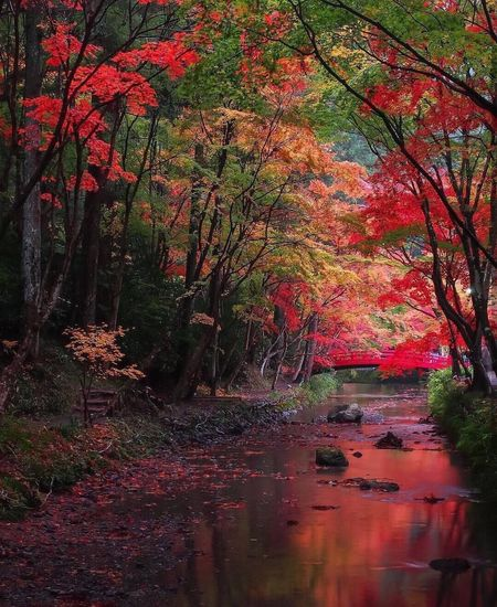 Autumn Nature Tree Tranquility Beauty In Nature Tranquil Scene Scenics Forest Change Leaf Landscape Outdoors Day No People Reflection Wilderness Growth Branch Water Travel Destinations Scenery Beautiful Nature Beauty In Nature Autumn🍁🍁🍁 Landscape_Collection