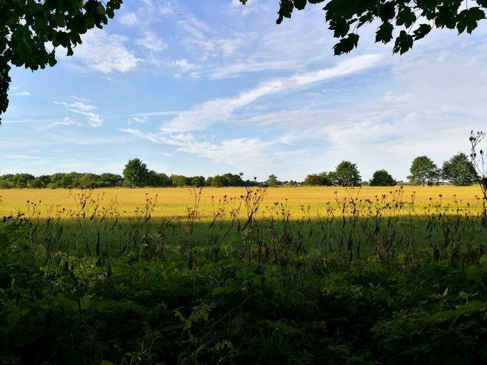 Landscape Landscape Scenics Scenery Nature Trees Field Crops Summer Blue Sky Beauty In Nature