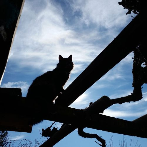 TakeoverContrast Cat Silhouette One Animal Domestic Cat Domestic Animals Animal Themes Feline Pets Animal Animal Themes Domestic Animals One Animal Cat Domestic Cat Silhouette Pets Sky Feline Animal Cloud Day Sin Filtros Sin Filtro Chile Sinfiltro Perspectives On Nature Black And White Friday