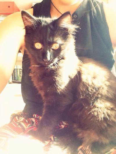 Cat! Cute Pets Sweet Babycat