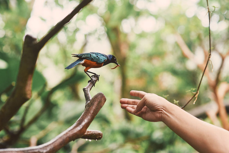 Person holding bird perching on tree being fed by human hand