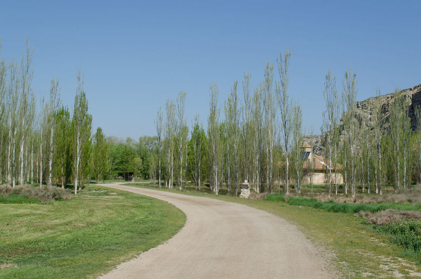 Galacho de Juslibol, Zaragoza,.Day Galacho Juslibol Macro Marzo Nature No People Outdoors Zaragoza Eddl 2015