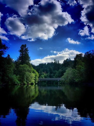 Tree Reflection Water Sky Lake Nature Tranquility Beauty In Nature Growth Tranquil Scene No People Forest Cloud - Sky Scenics Outdoors Waterfront Blue Day Tualatin River Tualatin EyeEm Selects