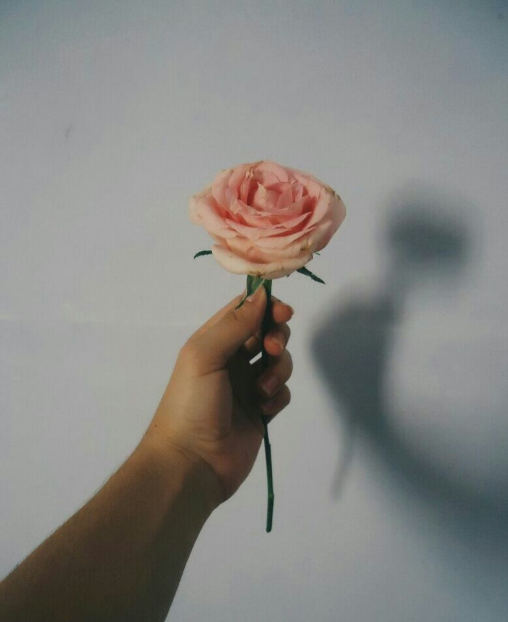 human hand, holding, flower, human body part, one person, rose - flower, real people, human finger, fragility, petal, close-up, freshness, flower head, nature, sweet food, outdoors, beauty in nature, dripping, day, people