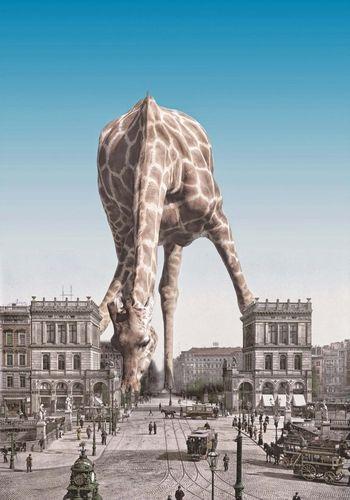 Open Edit Creative my giraffe Traveling