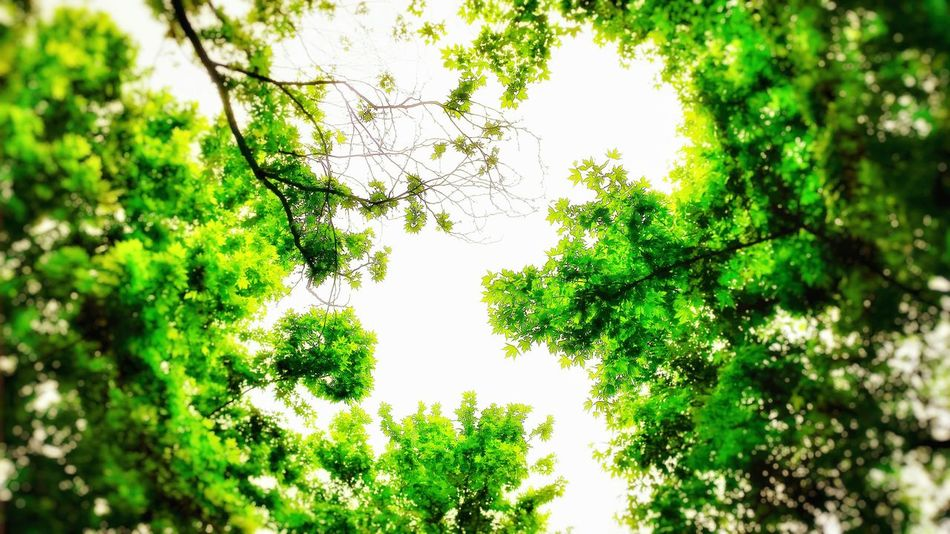 Sunshine Life In Colors Colors Trees Green Light And Shadow Light Sky Tree Eyem Nature Lovers