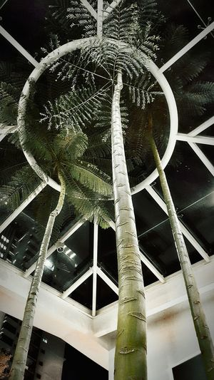 Always look up when things get you down Taking Photos Hanging Out Check This Out Hello World Relaxing Enjoying Life My Capture  My Point Of View Eyeem Photography Fresh On Eyeem  The Week Of Eyeem Evening Palm Tree Transparent Roof EyeEm Nature Lover Look Up And Smile Look Up Low Angle View Night View Indoor Garden Showcase July