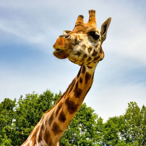 View of giraffe against sky