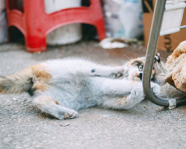 View of a cat lying down on street