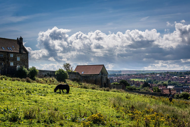 Cows on field by house against sky