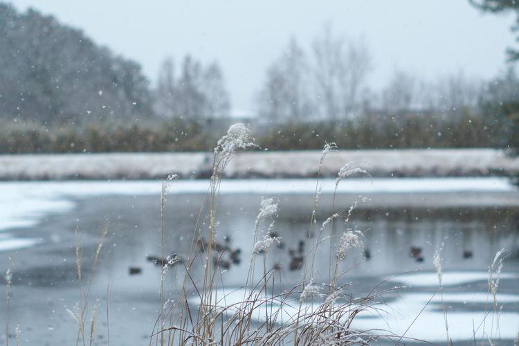 Frozen lake during rainy season