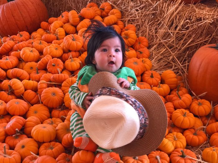 High angle view of cute baby girl sitting on pumpkins