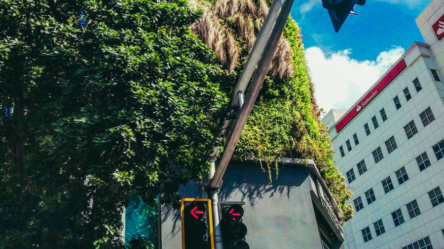 Tree Low Angle View Outdoors Building Exterior No People Sky Nature Day EyeEM Photos Puerto Rico EyeEm Gallery