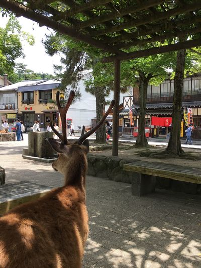 JapanLife Island Tree One Animal Animal Themes Day Outdoors Mammal Domestic Animals Built Structure Nature Pets No People