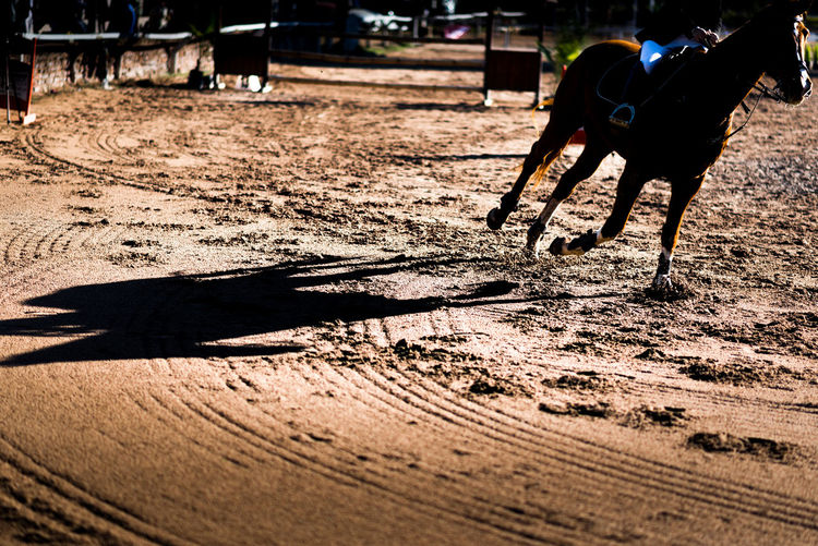 Shadow of person riding horse in mud