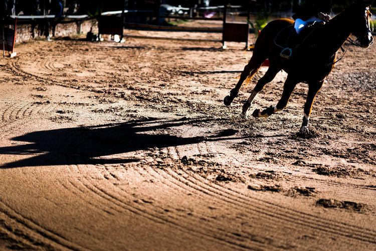 Animal Wildlife Dirt Domestic Animals Equine Photography Horse Mammal One Animal Sand