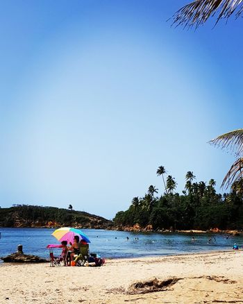 Water Tree Palm Tree Blue Summer Clear Sky