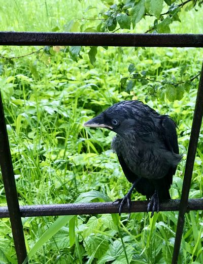 Black bird perching on a land
