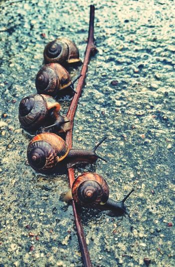 Close-up of snails with stem on ground