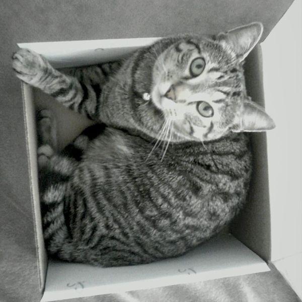 Cat trap Cats Cute Cats Animals Pets