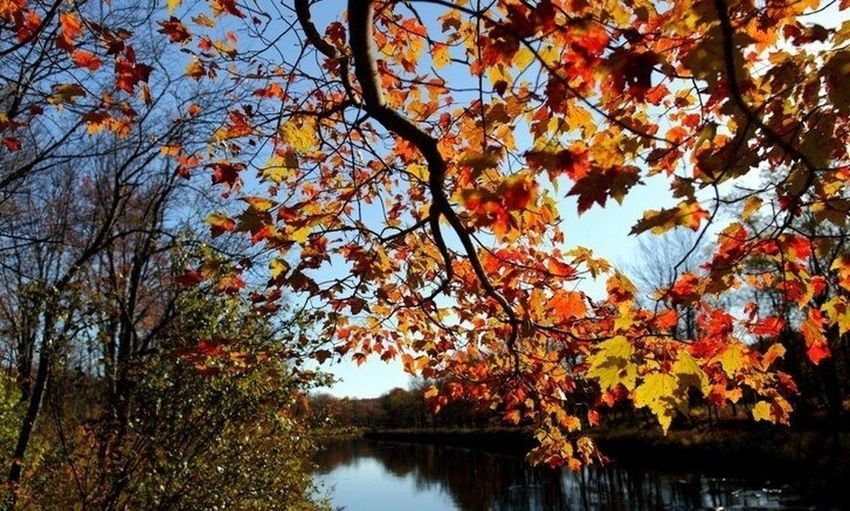 #autumn #farm #october #rebelsunited #streamzoophotooftheweek i #orange #beauty #dslr #sznuts #weather
