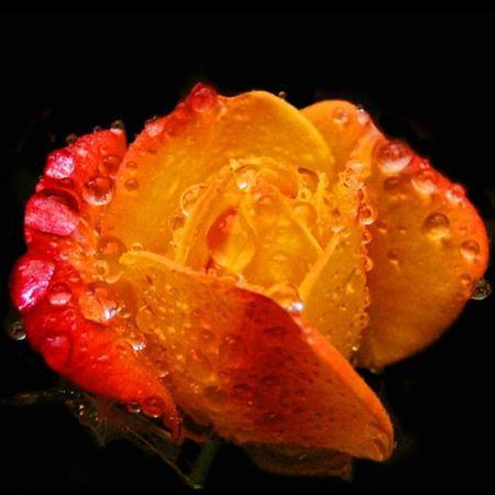 Macrolicious Macroaddictsanonymous Rsa_ladies Macro_secrets Splendid_flowers Macro_droplet_passion